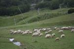 Ladang kambing Gourette, Pyrene