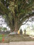 2004-11 Bali-14