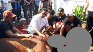 Gubernur DKI Jakarta, Anies Baswedan, menyembelih sendiri hewan kurbannya di kawasan Cilandak, Jakarta Selatan, Minggu (11/8/2019). (Foto: iNews.id/Irfan Ma'ruf)